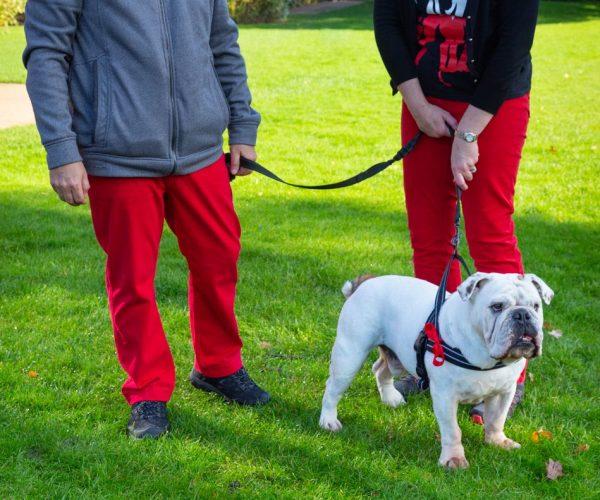 Couple&Dog